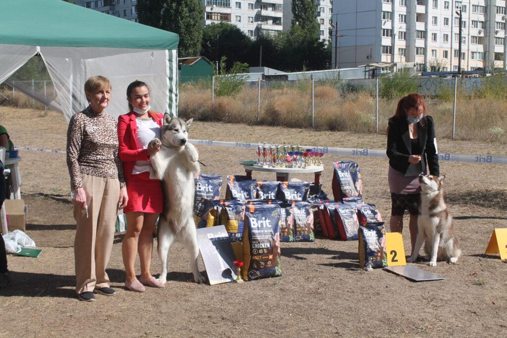 Результаты — 29 августа 2020 Всероссийская выставка собак ранга САС-Чемпион РКФ + монопородные выставки