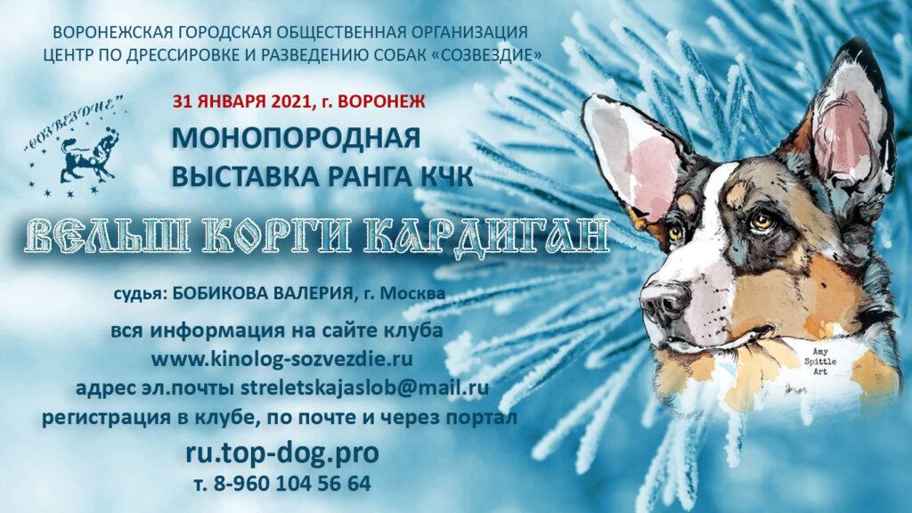 31 января 2021 Закрытое зоотехническое мероприятие — Монопородная выставка ранга КЧК вельш корги кардиган